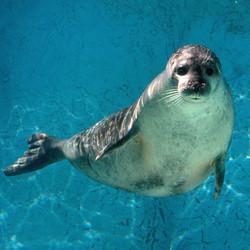 Corporate Membership: Seal