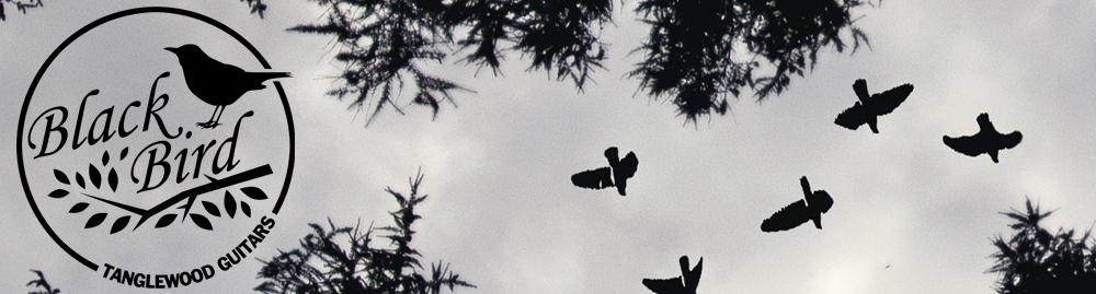 tw-blackbird.jpg