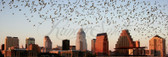Bats Over Austin Panoramic