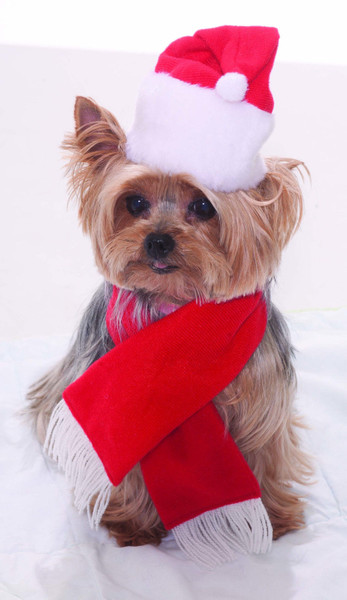 Christmas Pet Costumes.Santa Hat Scarf Christmas Pet Costume Set Red White Dog Cat Holiday Clothes