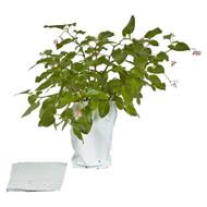 Grow Bags, 3 gal - 10 Pack