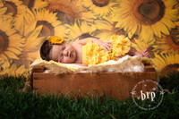 Vinyl Photography Floordrop or Backdrop - Sunflower Photography Prop  - Item 107