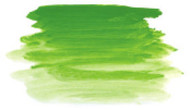 Archival Artist Oils 300ml Permanent Green Light S2