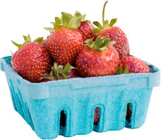 Pallman Farms Already Picked Quarts of Strawberries