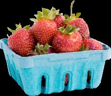 Pallman Farms Already Picked Quarts of Strawberries