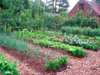 20' X 20' Garden Plot