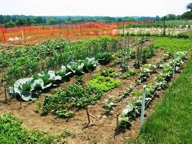 20' X 40' Garden Plot