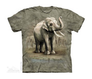 ASIAN ELEPHANTS - CH