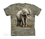 ASIAN ELEPHANTS - CH