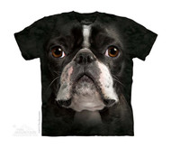BOSTON TERRIER FAC - CH