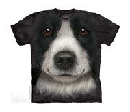 BORDER COLLIE - CH