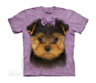 YORKSHIRE TERRIER PUP- CH