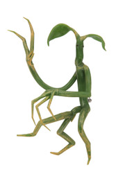 Warner Bros Pickett Bowtruckle Pin & Necklace