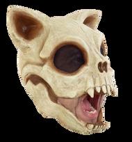 Cat Skull Image