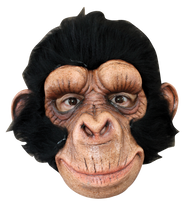 Chimp George Image