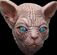 Sphynx Image