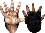 Chimp Brown Hands Image