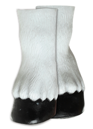 Horse Hooves White Image