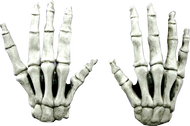 Large Skeleton Hands (White) Image