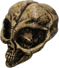 Alien Resin Skull Image