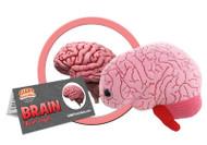 Brain Organ