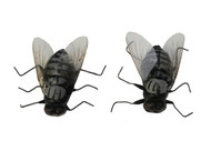 MAGNETIC FLY 2 PACK