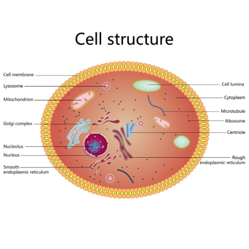 The Cellular System
