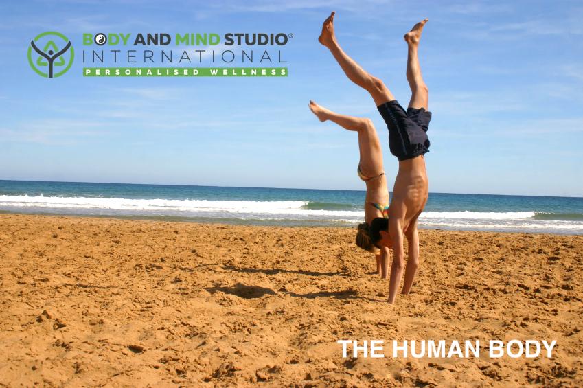 Body and Mind Studio International - The Human Body