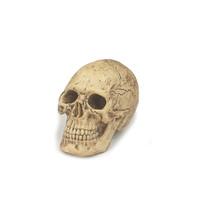 ACI Toys - Cannibal Skull (NOT Head Sculpt) (ACICSL-01)
