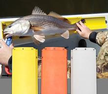 The Fish Stik Yellow