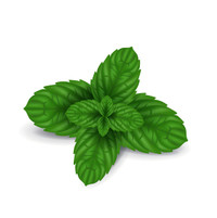 Peppermint  the crisp, clean, true peppermint scent.  Just Add Water to Refresh. Best Damn Scents - Take A Scentimental Journey