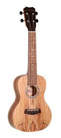 ISLANDER Traditional concert ukulele with spalted maple top