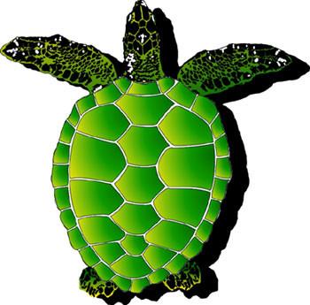 Large Sea Turtle