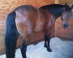wet end horse