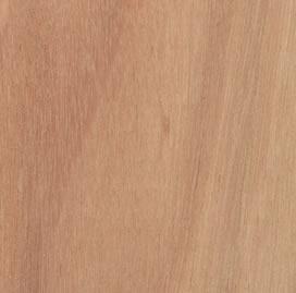 eucalyptus-500.jpg