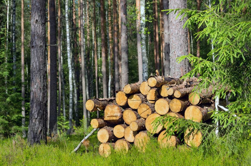 the reasons for using sustainable wood
