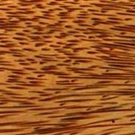 red-palm-500.jpg