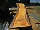 """Blonde Eucalyptus Slab GWS-813 3¼""""x24""""-27""""x120"""" - wood slab"""