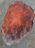 """Jarrah JS-1 22""""x35""""x2.25"""" - wood slab"""