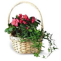European Basket Garden