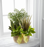 TheFrench Garden employs lush, green plants to create a gift ideal for any of lifes special occasions. Containing a varied assortment of 6 green plants, this dish garden arrives presented in a natural round woodchip basket accented with a yellow wire