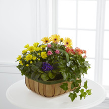 TheGentle Blossoms Basket is a wonderful way to brighten someones day. A collection of our finest plants are brought together in a greenrimmed natural woodchip basket to create a warm and comforting sentiment.