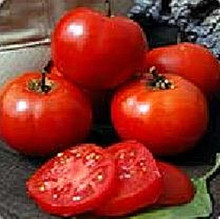 Crimson Sprinter Tomato