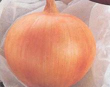 Onion Sweet Spanish Yellow