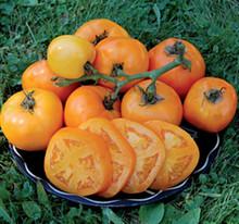 Moonglow  Heirloom Tomato