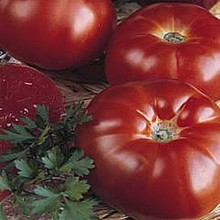 Marmande Heirloom Tomato