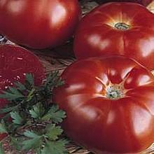 Marmande Heirloom Tomato
