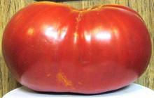 Tomato Big Zac - Six Pounders