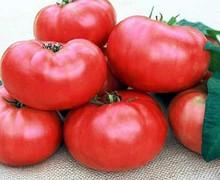 Mariannas Peace Heirloom Tomato