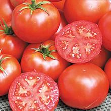 John Baer Heirloom Tomato